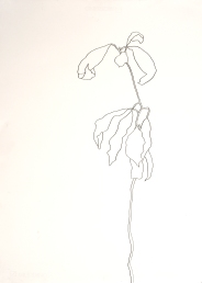 Meghan Balliett drawing Avocado Plant (1)
